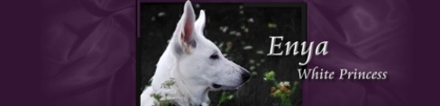 Perro Blanco's Enya White Princess